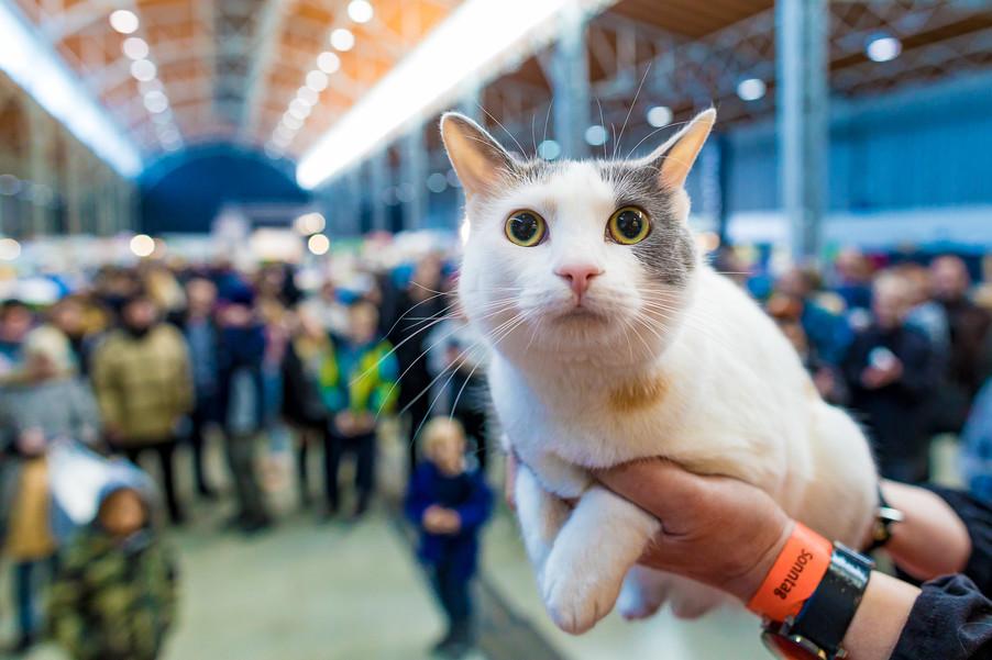 Bild 3 | Haustiermesse Wien