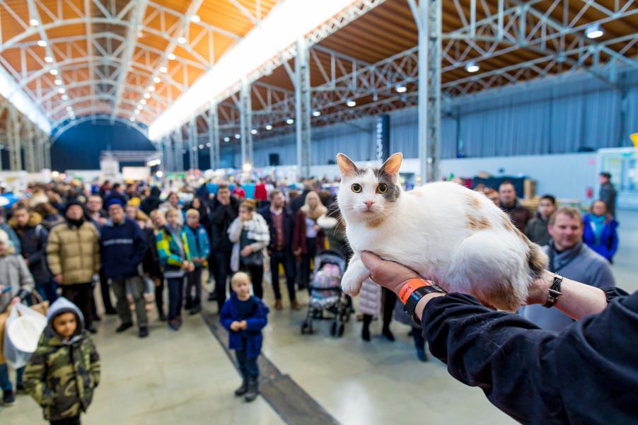 Bild 7 | Haustiermesse Wien