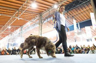 Bild 9 | Haustiermesse Wien