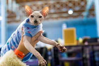 Bild 28 | Haustiermesse Wien