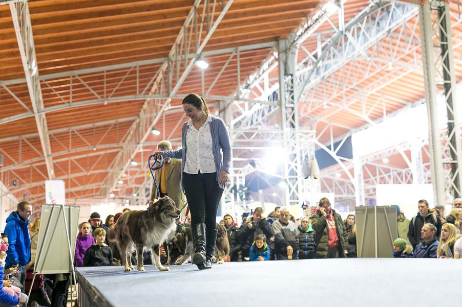 Bild 29 | Haustiermesse Wien