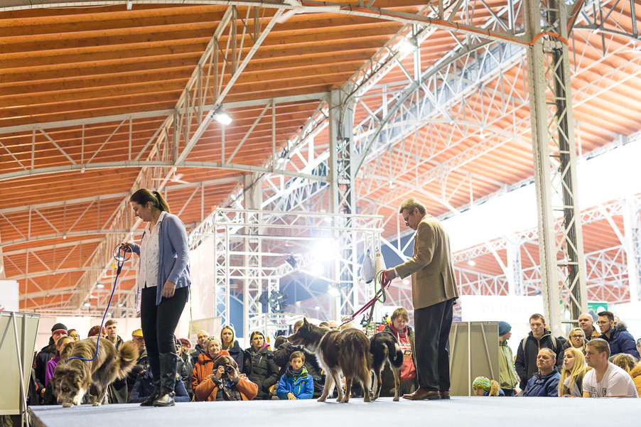 Bild 30 | Haustiermesse Wien