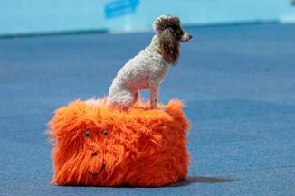Bild 35 | Haustiermesse Wien