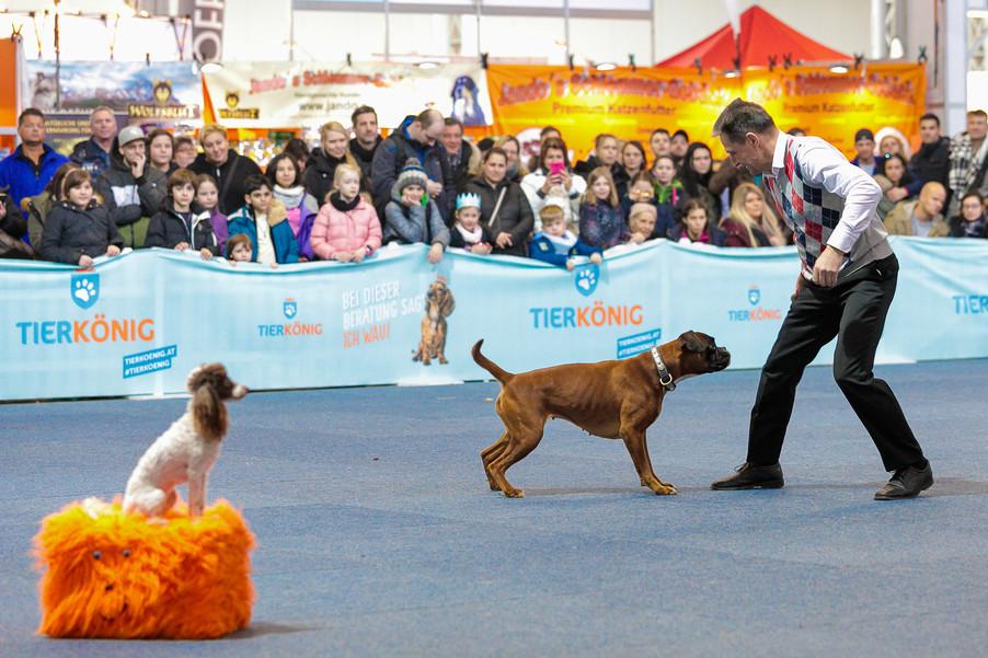 Bild 38 | Haustiermesse Wien