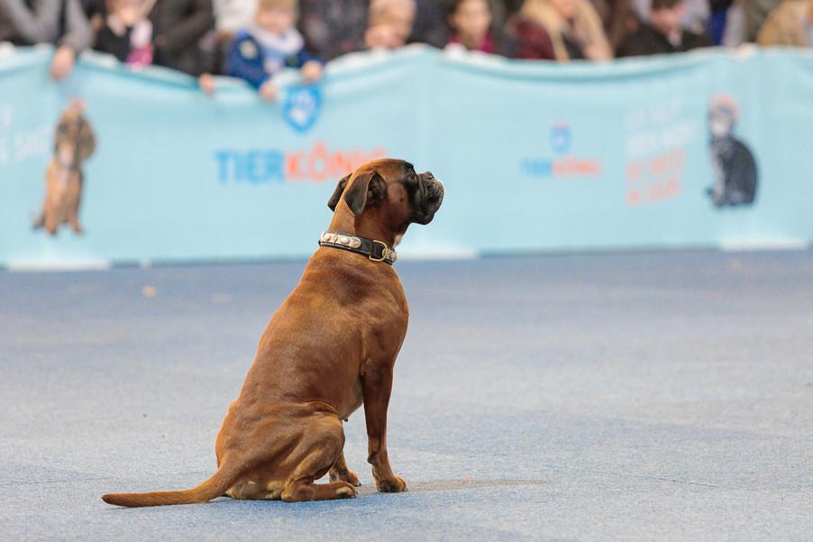 Bild 39 | Haustiermesse Wien