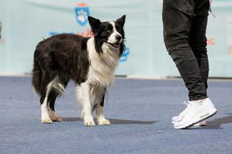 Bild 56 | Haustiermesse Wien