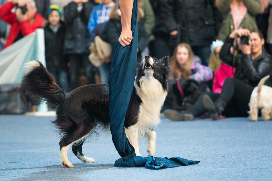 Bild 62 | Haustiermesse Wien