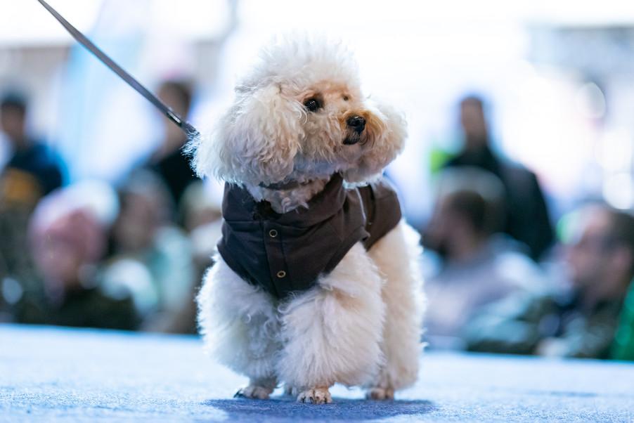 Bild 46 | Haustiermesse Wien