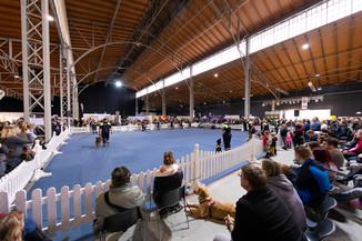 Bild 75 | Haustiermesse Wien