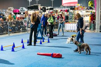 Bild 95 | Haustiermesse Wien