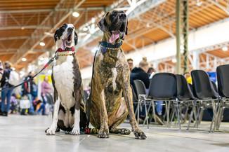 Bild 99 | Haustiermesse Wien