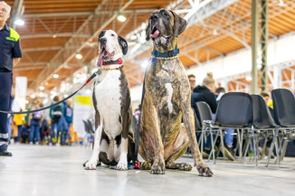 Bild 100 | Haustiermesse Wien