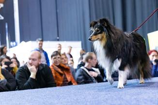 Bild 114 | Haustiermesse Wien