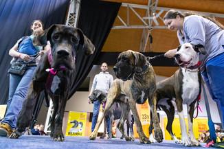 Bild 116 | Haustiermesse Wien